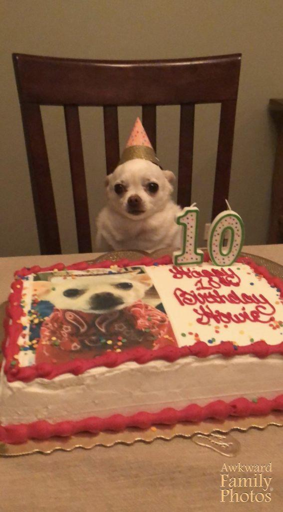 Here Is My Chihuahua Howie On His Most Recent 10th Birthday I Buy All Dogs A Cake Every Year For Their Birthdays Because Im That Dog Mom