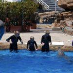 Dolphin Bomb